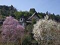 光臺寺 五條市西吉野町唐戸 Kōdaiji 2013.4.05 - panoramio.jpg
