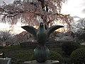 円山公園の桜 - panoramio (1).jpg