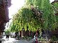 古城垂柳和鲜花 - panoramio.jpg