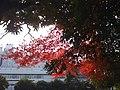 多摩センター中央公園 - panoramio.jpg