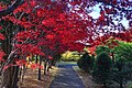 平岡樹芸センター(Hiraoka arboriculture center) - panoramio (28).jpg