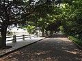 榕荫大道 - Banyan Avenue - 2012.03 - panoramio.jpg