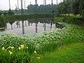 池塘 - panoramio (1).jpg