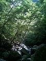 溪流越来越窄 - panoramio.jpg