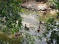 06659jfCandaba Pampanga Fields Duck Farming Bahay Pare Dulong Ilog Bulacanfvf 18.JPG