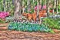 15-13-030, azalea garden - panoramio.jpg