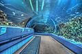 16 08 065 aquarium.jpg