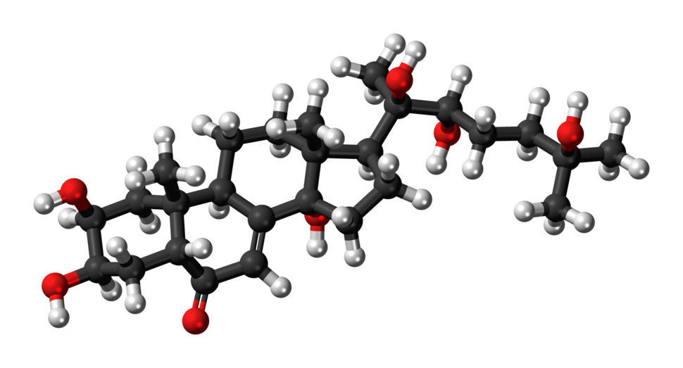 Ball-and-stick model of the 20-hydroxyecdysone molecule