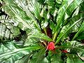 2012 kveten botanicka zahrada 085.jpg