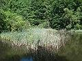 20140618140DR Tharandt Seerenteich im Tharandter Wald.jpg