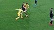2015–16 Serie A - Frosinone v Juventus - Dionisi, Bonucci and Ciofani.jpg