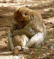 2016-04-21 14-39-33 montagne-des-singes.jpg