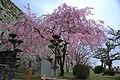20160403 Himeji-Castle 3327 (26758517901).jpg