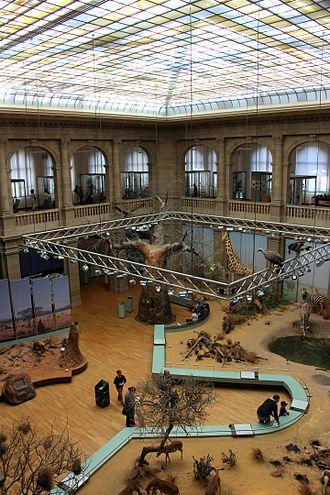 Museum Koenig - Central hall