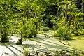 2016 Wald Jasmund 03.jpg