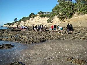 Field trip - Biology students on a field trip to Waiake Beach in Torbay, New Zealand