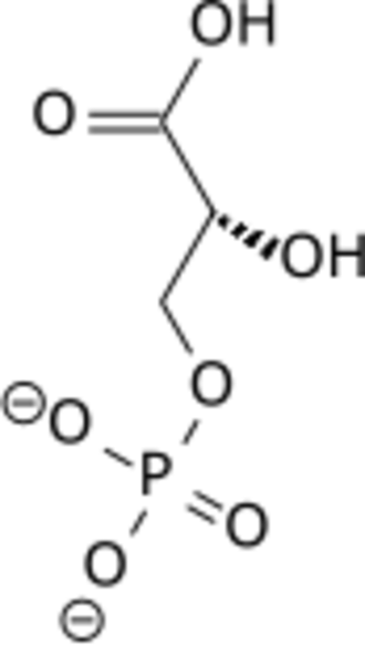 Phosphoglycerate mutase - Image: 3 phospho D glycerate wpmp