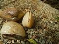4087Ants Common houseflies foods delicacies of Bulacan 01.jpg