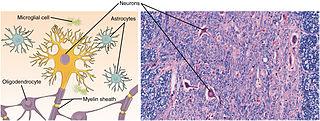 Nervové tkanivo je tvorené nervovými bunkami