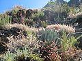 4 Peaks Flora.jpg