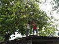 9957jfAduas Norte Sur Cabanatuan City, Nueva Ecijafvf 02.JPG
