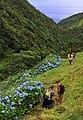 Açores 2010-07-20 (5072532570).jpg