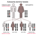 Aŭtosome domina heredo.png