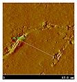 AFM-2D-laser-scan-of-9.jpg