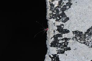 AKA Red Sea Squirt (1 of 3).jpg