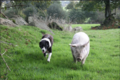A dog and a pig walking together.png