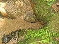 A origem do Rio Tietê.JPG