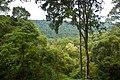 A walk in the selva, Yaboti, Misiones, argentina, 10th. Jan 2011 - Flickr - PhillipC.jpg