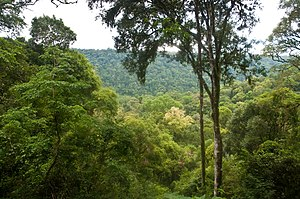 Climatic regions of Argentina - High temperatures and abundant rainfall in much of Mesopotamia enable it to support jungles such as this one in Misiones Province.