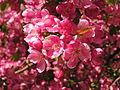 Ab plant 1655.jpg