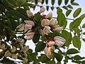 Ab plant 2130.jpg