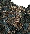 Acanthite-Silver-tuc8-107c.jpg