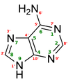 Adenine structure chimique.png
