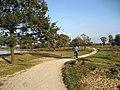 Aekingerzand, Drents-Friese Wold, Netherlands - panoramio.jpg