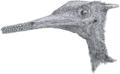 Aerodactylus portrait.png