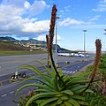 Aeroporto da Madeira, Portugal - 2013-01-12 - 86227546.jpg