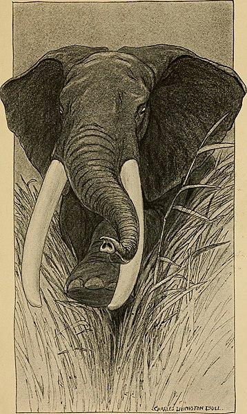 File:African adventure stories (1914) (17750935078).jpg
