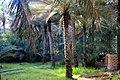 Al Ain Oasis View.jpg