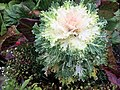 Alaska Botanical Garden ENBLA10.jpg