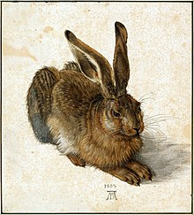 Feldhase (1502), gouachiertes Aquarell auf Papier, Albertina, Wien (Quelle: Wikimedia)