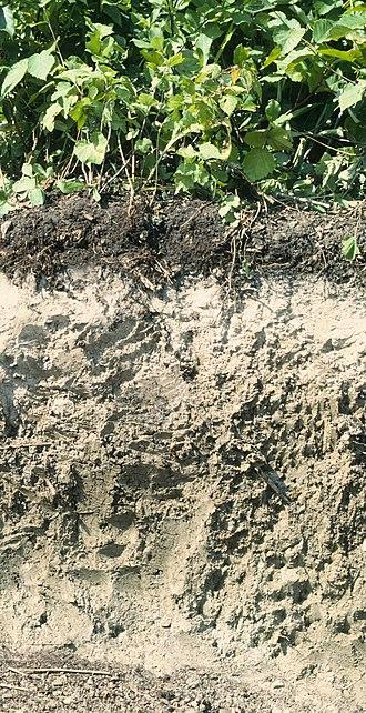 USDA soil taxonomy - Image: Alfisol
