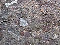 Alluvial polymict conglomerate (Mount Rogers Formation, Neoproterozoic, 750-760 Ma; Fox Creek roadcut, west of Troutdale, Virginia, USA) 26 (30413053251).jpg