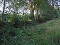 Alter-Floßgraben-Pilzweg-3.jpg