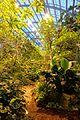 Amazonienhaus interior view - Wilhelma Zoo - Stuttgart, Germany - DSC02520.jpg