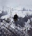 American Eagle (9267476811).jpg