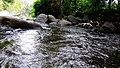 Anakkal Water Falls - panoramio (7).jpg